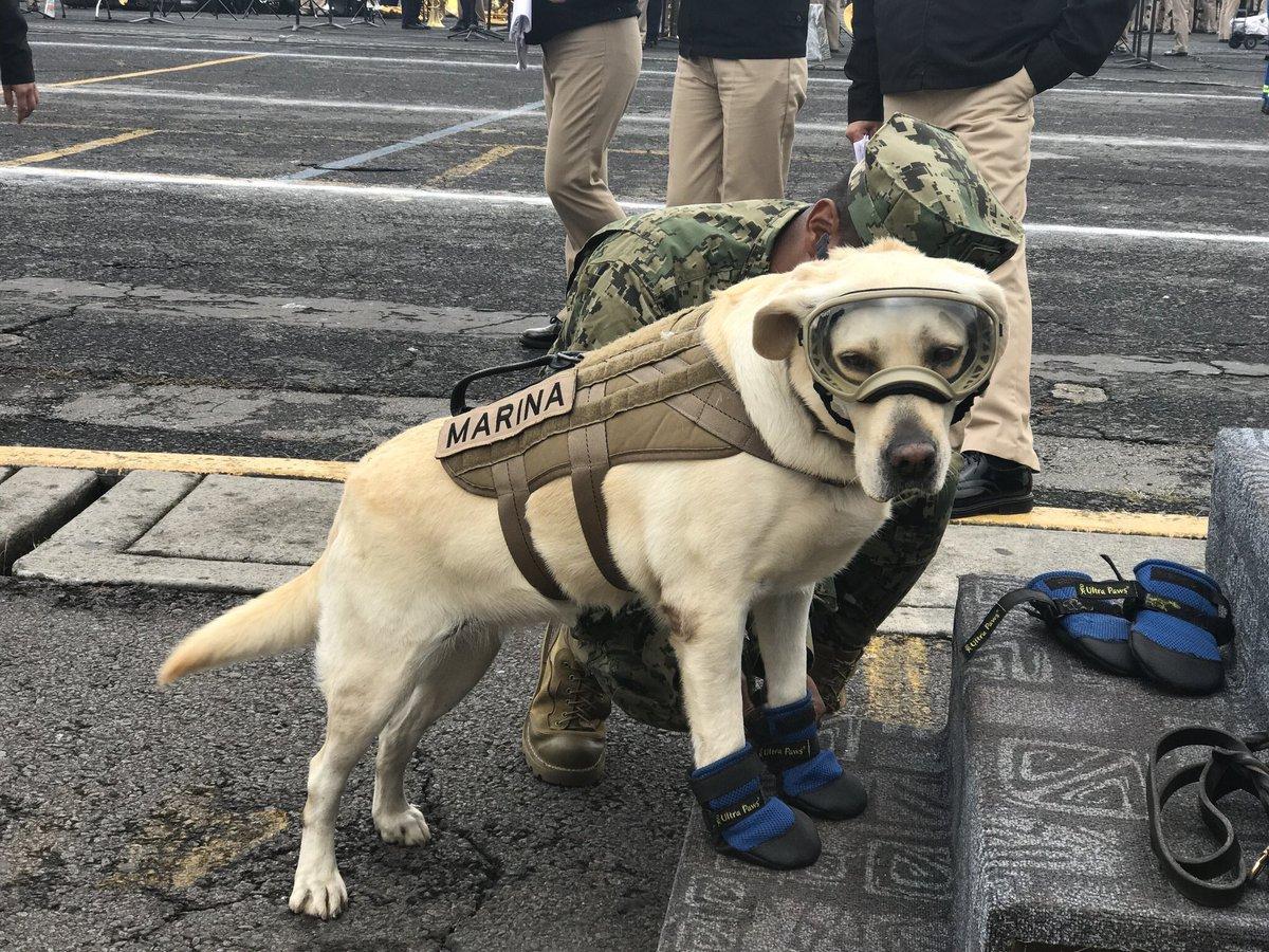 Záchranársky pes pomáha ľudom v Mexiku