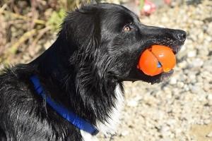 Novinka medzi hračkami v psíčkarskom svete, o ktorej ste ešte nepočuli! Hračky, ktoré chladia! :-)