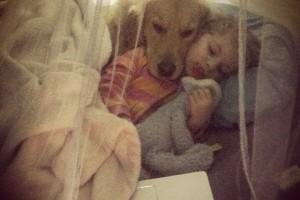 Pes, najlepší priateľ človeka