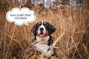 Osina - strašiak všetkých psíčkarov