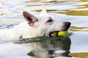 Plávanie - relax v lete, šport, či nebezpečná zábava?