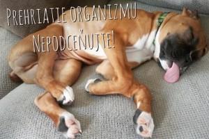 Prehriatie psa počas leta. Toto sú rady ktoré mu zachránia život + VIDEO