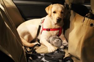 Cestovanie so psom nielen na dovolenku