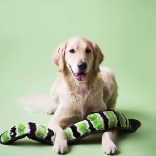 Had veľký