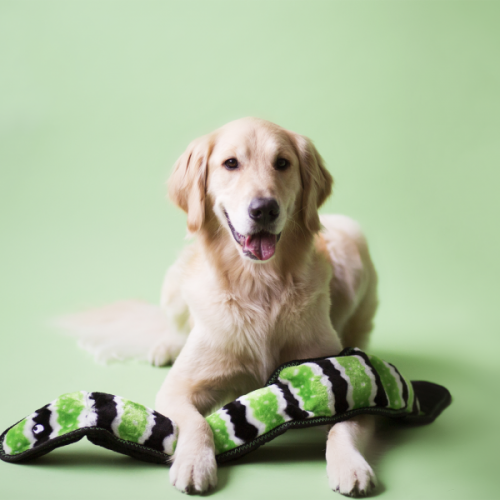 Had obrovský